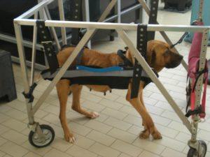 aparelho para cães voltar a andar