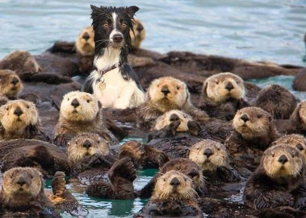 Funny Otter Dog Joke Picture