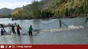 Kunjungi Panen Raya Ikan Bandeng di Boalemo, Kemendes PDTT RI Ajak Pemdes Manfaatkan Potensi SDA