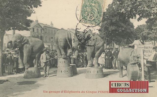 répétition publique avec les éléphants Pinder