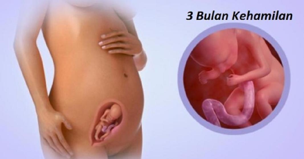 terapi janin kehamilan 3 bulan