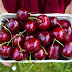 How to sprout a cherry Seeds? - Best Way To Grow Cherry Seeds