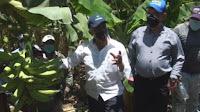 Montecristi: Ministro Agricultura Osmar Benítez ordena vender plátanos a bajo costo a toda la familia de la provincia.