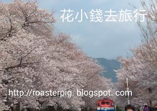 慶和站櫻花