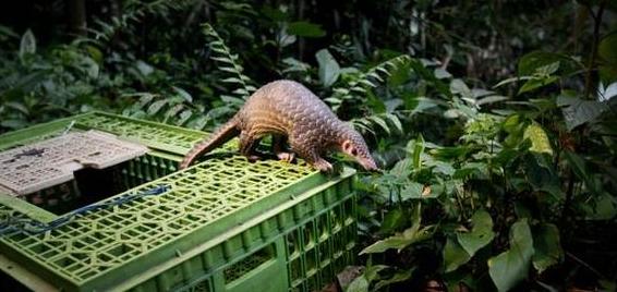 वैश्विक वन्यजीव व्यापार प्रजातियों की गिरावट का कारण बनता है: अध्ययन