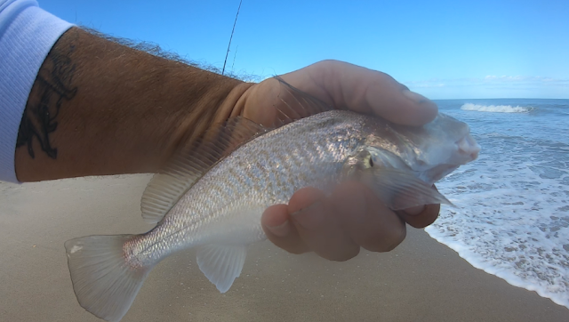 Florida East Coast Surf Fishing Reports