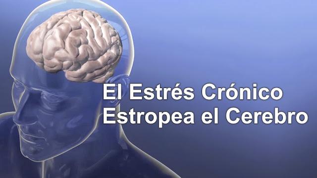 El Estrés Crónico Estropea el Cerebro