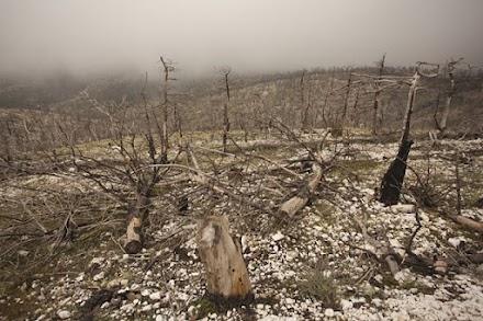 WWF : Επιστολή στον Πρωθυπουργό με 63.000 υπογραφές για πρόληψη δασικών πυρκαγιών