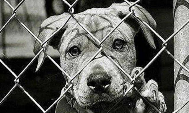 Ради чего собаки были созданы Творцом? Неужели только для того, чтобы погибнуть от рук людей…Я выживу