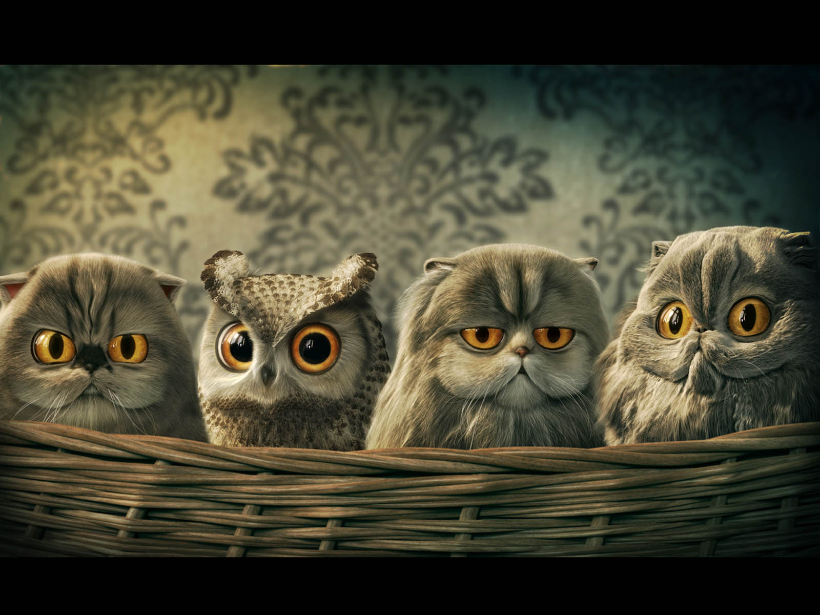 wallpapers: Funny Owl  wallpapers: Fun...