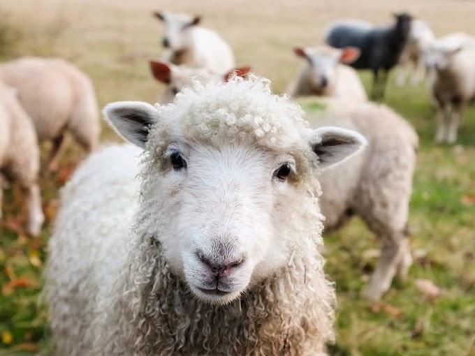 La UE tratará de evitar el maltrato animal en su transporte a otros países