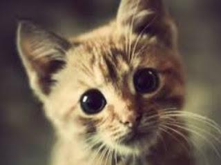 Arti Mimpi Menyayangi Kucing Menurut Buku Mimpi