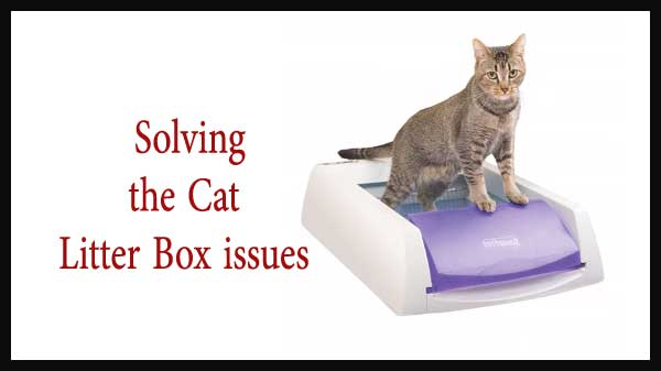 Solving the Cat Litter Box issues