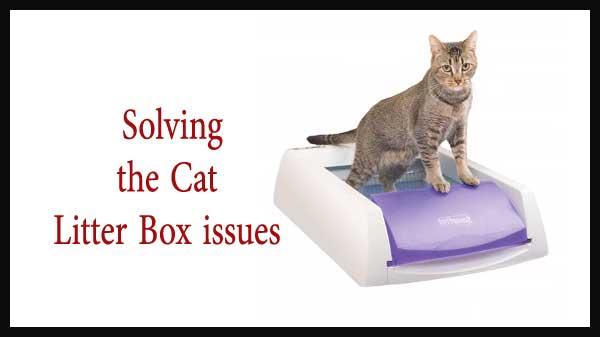 cat litter box problems solutions