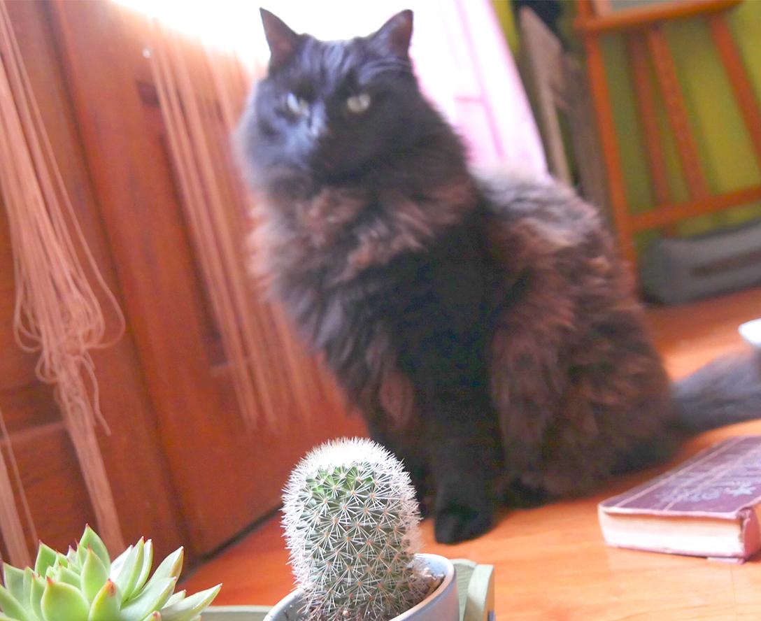 cactus black cat