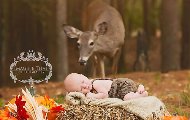 "omorfos-kosmos.gr - Viral - Όταν ένα ελάφι ""εισβάλλει"" στη φωτογράφηση ενός μωρού (Εικόνες & Βίντεο)"