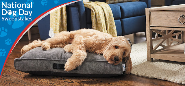 La-Z-Boy is celebrating Dog Day by giving pet owners a chance to enter daily to win one of three cozy and comfy beds for their pet!