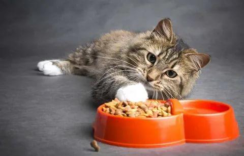 Feeding your Indoor Cat