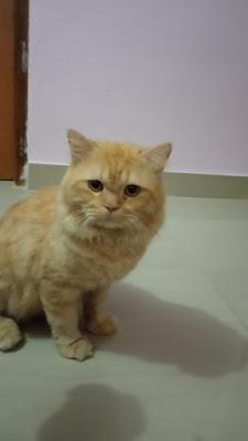 Kucing namanya gendut