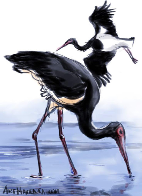 Black Storksketch painting. Bird art drawing by illustrator Artmagenta.