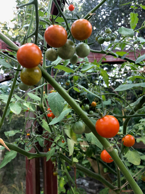 growing vegetables in greenhouse