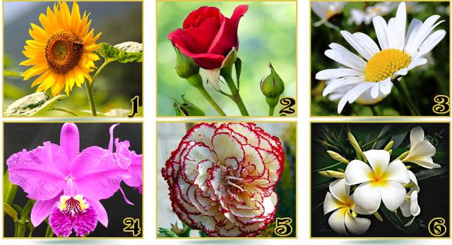 Test de personalidad de Las flores