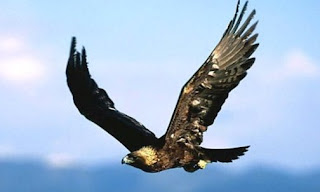 Sonhar com águia pousando no braço