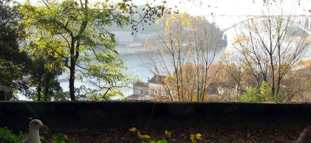 Gaivota no Jardim do Porto