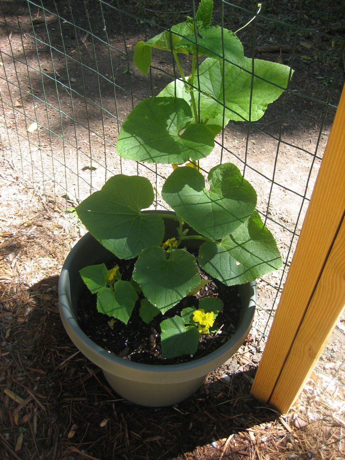 Kaysarverart April Garden Update
