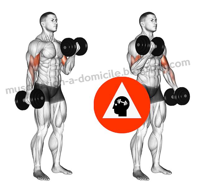 exercice musculation curl biceps haltère alterné