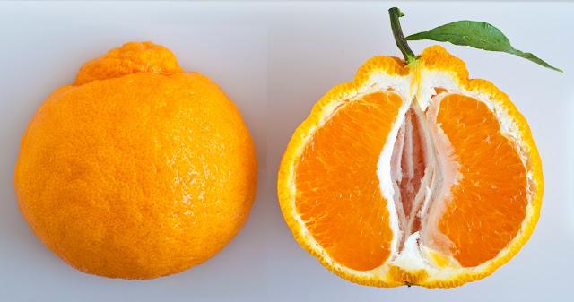 Cara Pilih Limau Mandarin Yang Manis Kena Tahu Jenis Limau