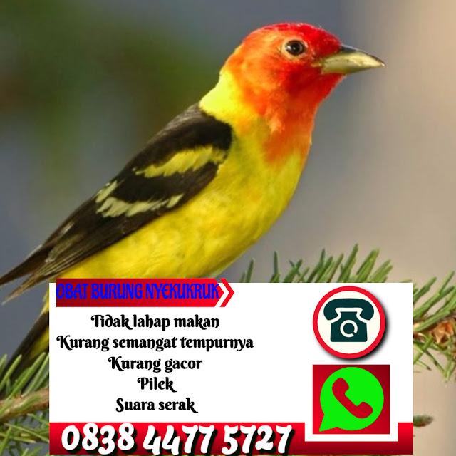 Obat Snot Burung