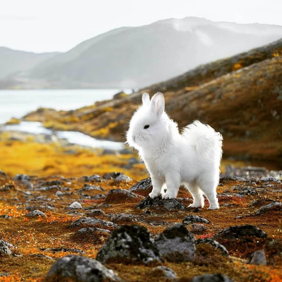 03-Dog-Bunny-AOG-Fredriksen-Animal-Art-www-designstack-co