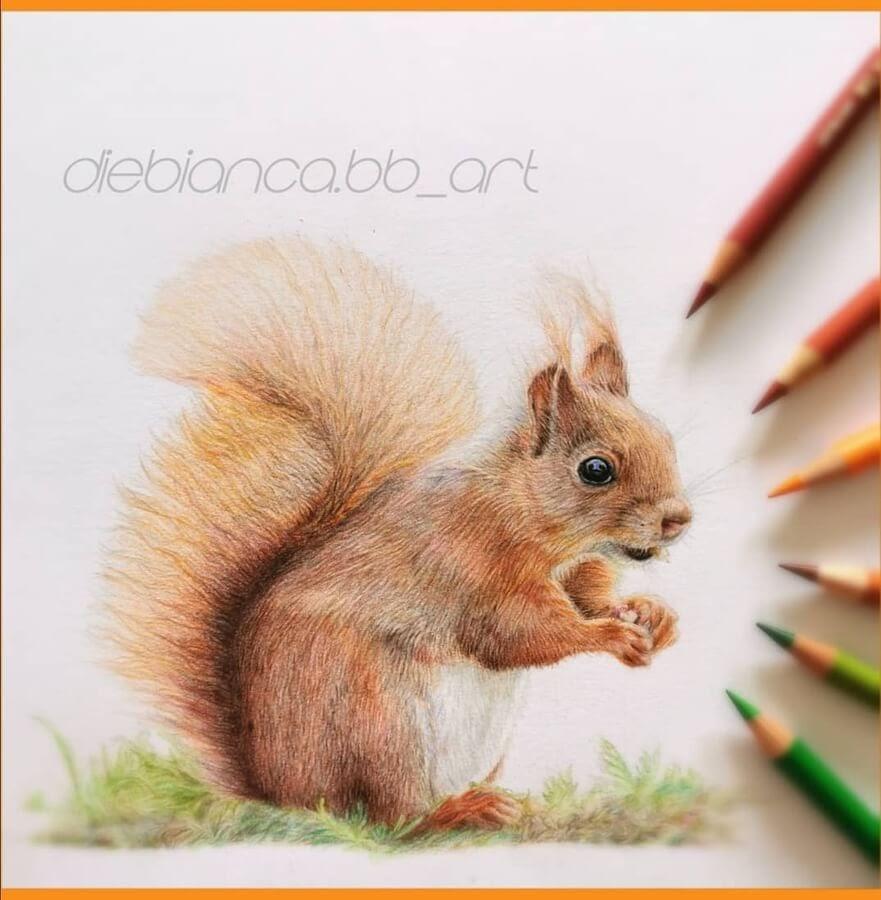 07-Little-red-squirrel-Bianca-Buer-www-designstack-co