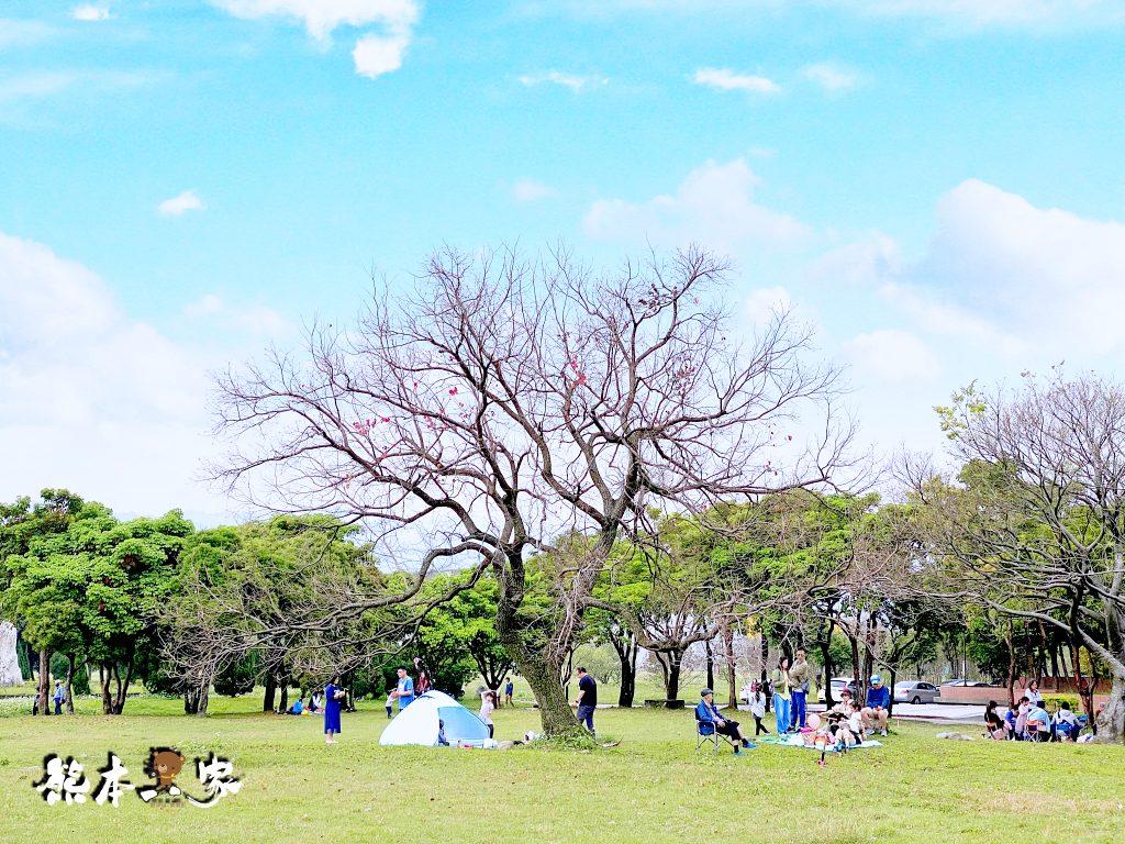 228連假三峽北大賞櫻花兼野餐親子半日遊|賞花點不少值得散步走走喔