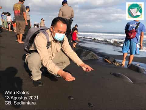 Kegiatan Konservasi di Pantai Watu Klotok