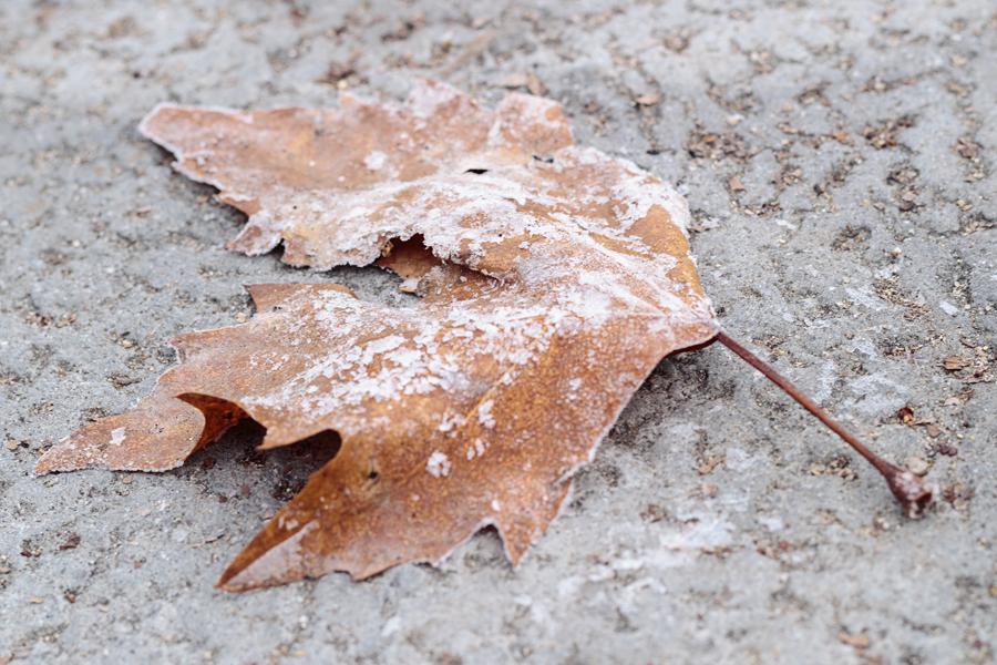 Hoja seca cubierta de escarcha sobre el suelo
