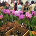 """""""Mostra de Orquídeas"""" de 22 a 24 de junho no Passeio Shopping com entrada gratuita"""