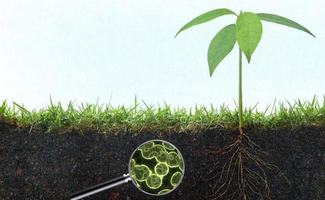 Manfaat Mikroorganisme Dalam Daur Ulang Elemen-Elemen Vital