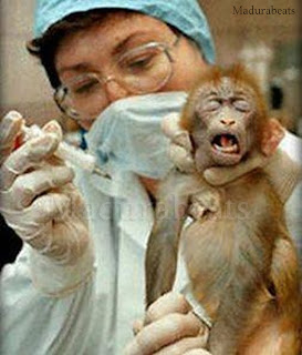Human testing,_Animal testing,Monkey in lab