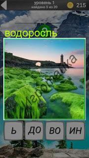 на камнях на берегу много зеленых водорослей 1 уровень 600 забавных картинок