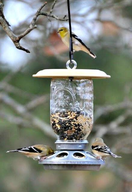 Comedouro para pássaros, alimentadores de pássaros