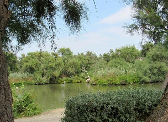 paisajes del parque ornitologico Pont de gau en la Camarga