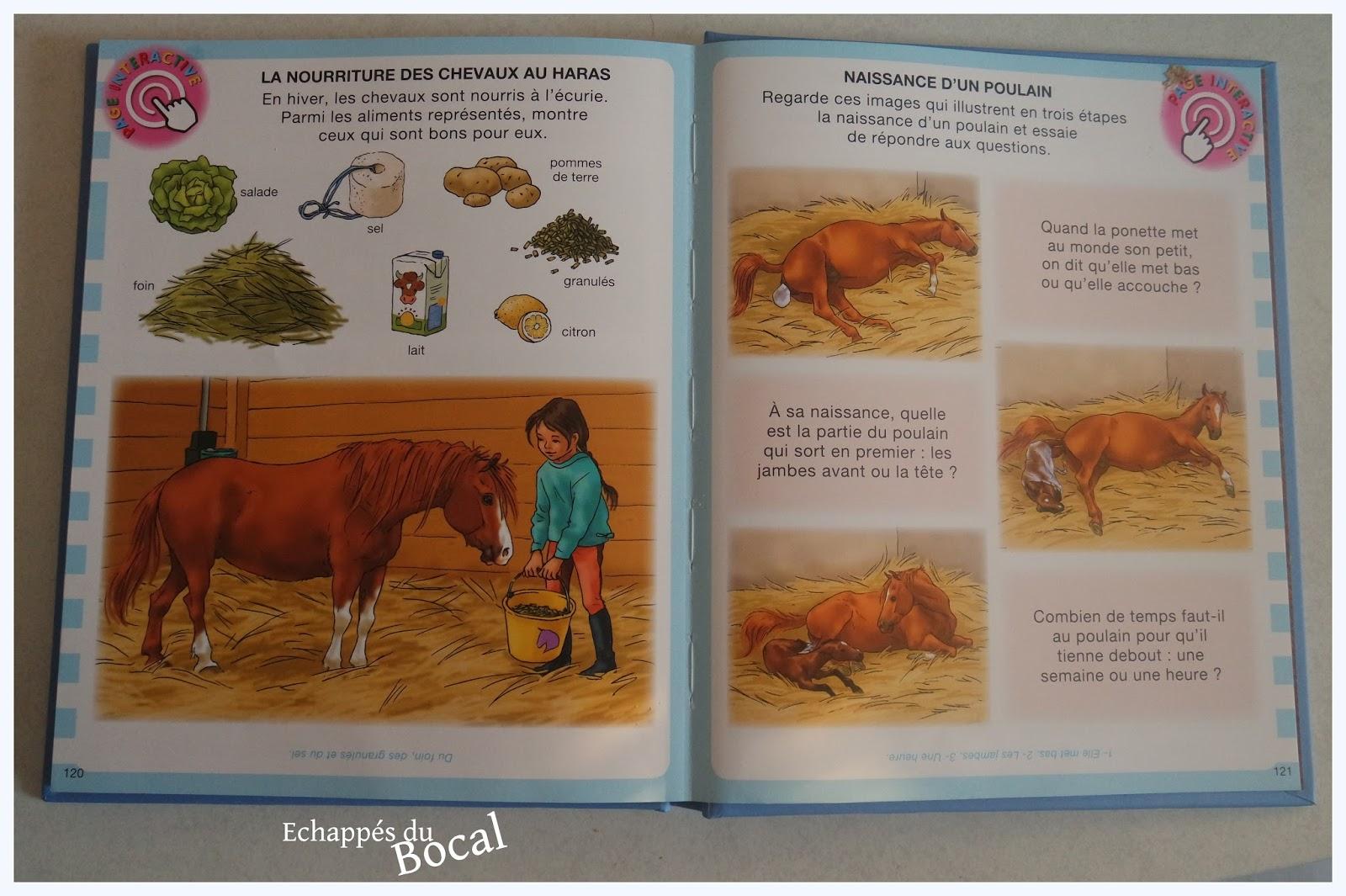 poney nourriture