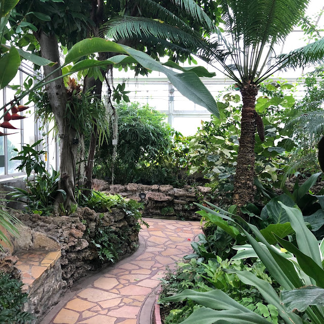 A casual walk through the greenery of the Tropical Room at Oak Park Conservatory