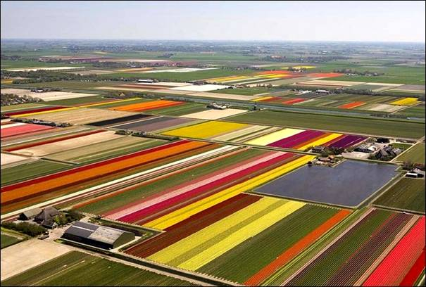 مزارع الزهور image021-769743.jpg
