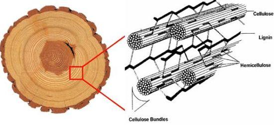 Selulosa adalah senyawa seperti serabut Struktur, Jenis, Sifat dan Sumber Selulosa