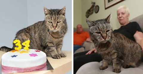 This cat was adopted in 1986 and she celebrates her 34nd anniversary in this day