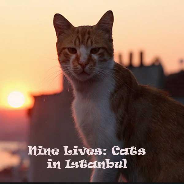 Kedi, Film Kedi, Kedi Synopsis, Kedi Trailer, Kedi Review, Download Poster Film Kedi 2016
