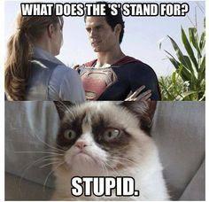 Grumpy Cat Memes 7